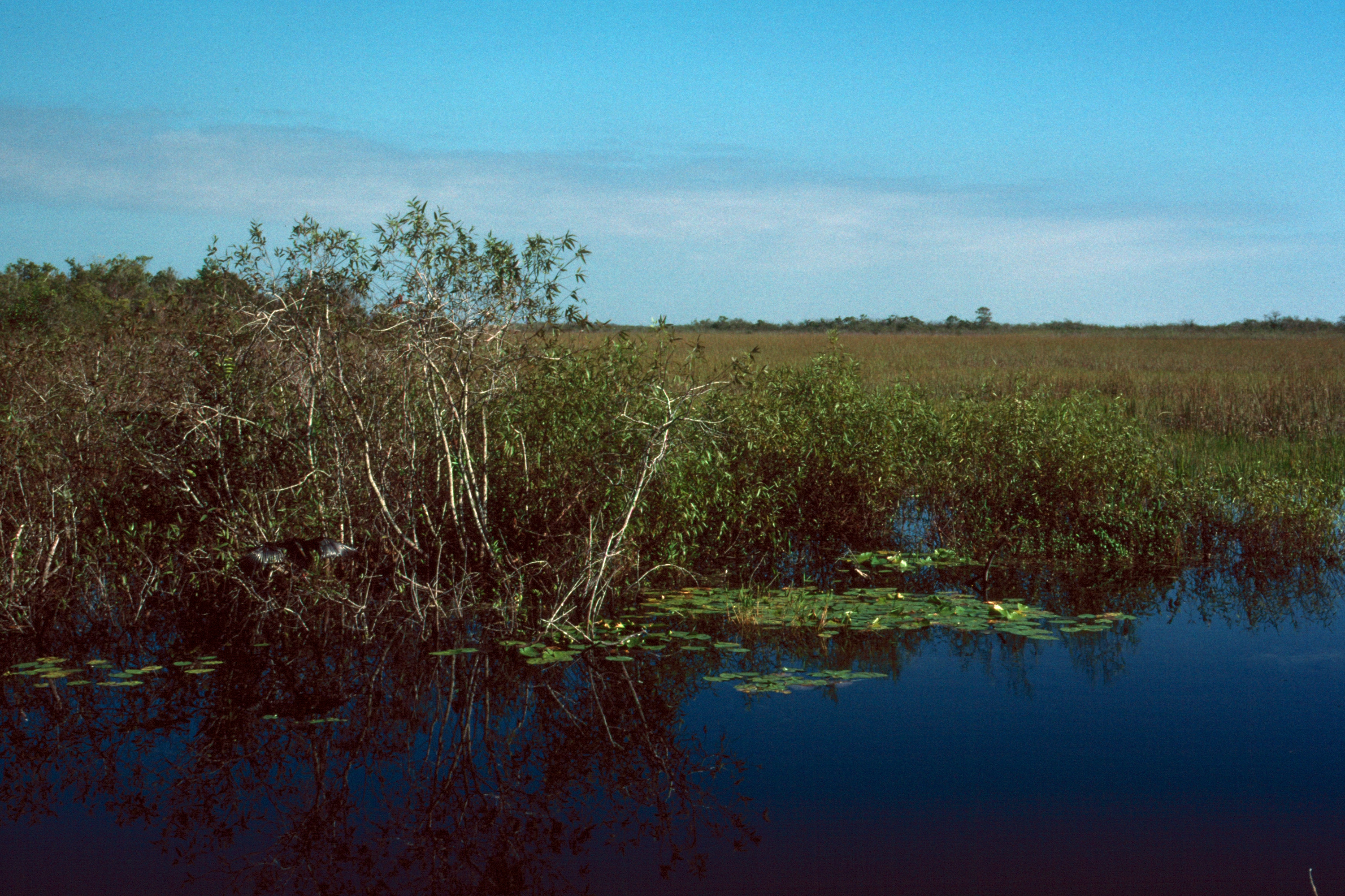 Everglades 1990 A04 Anhinga Trail