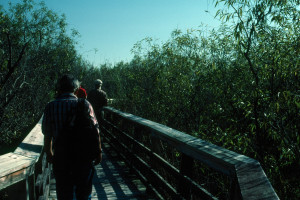 Everglades 1990 A10 Anhinga Trail