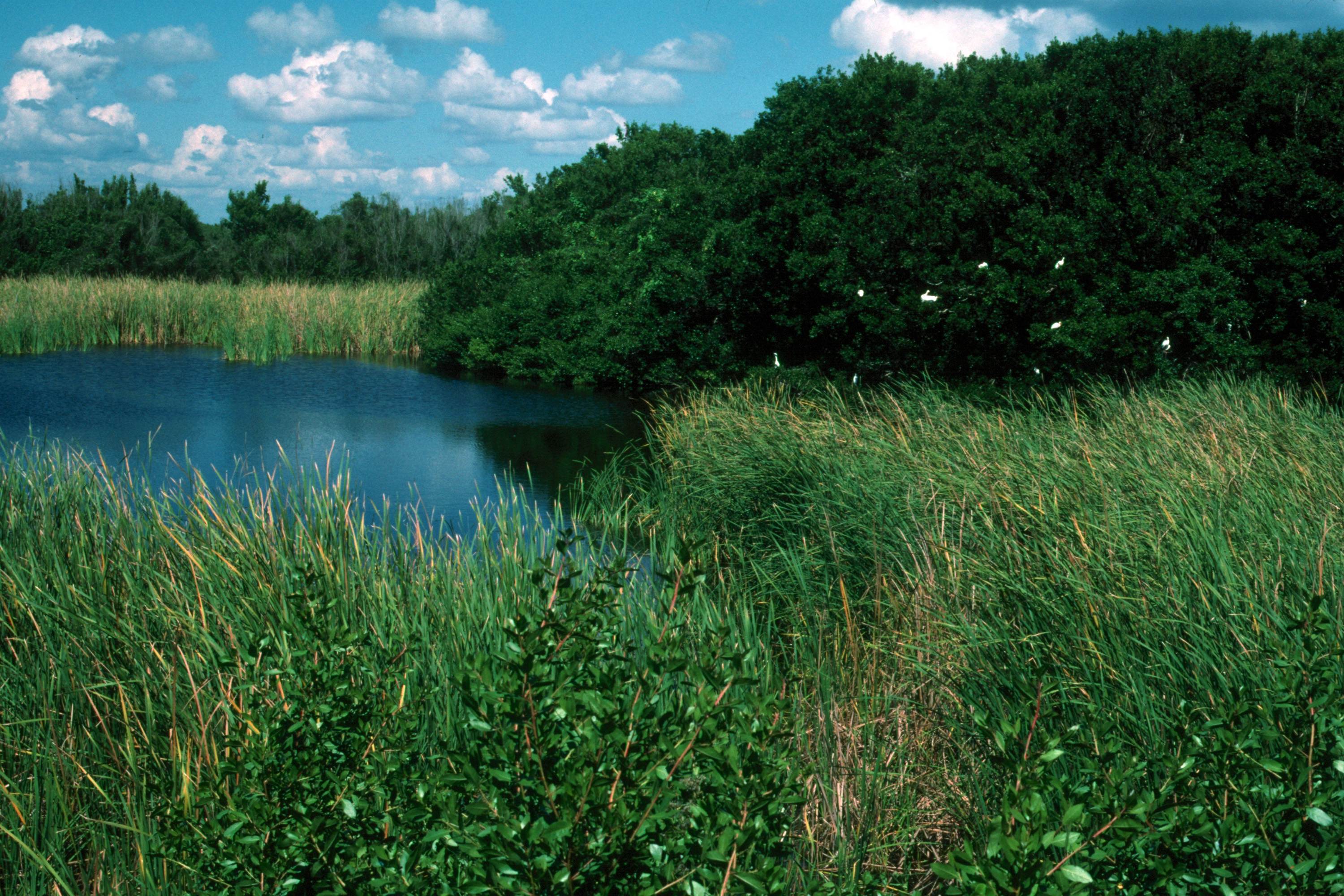 Everglades 1990 B10 Eco Pond