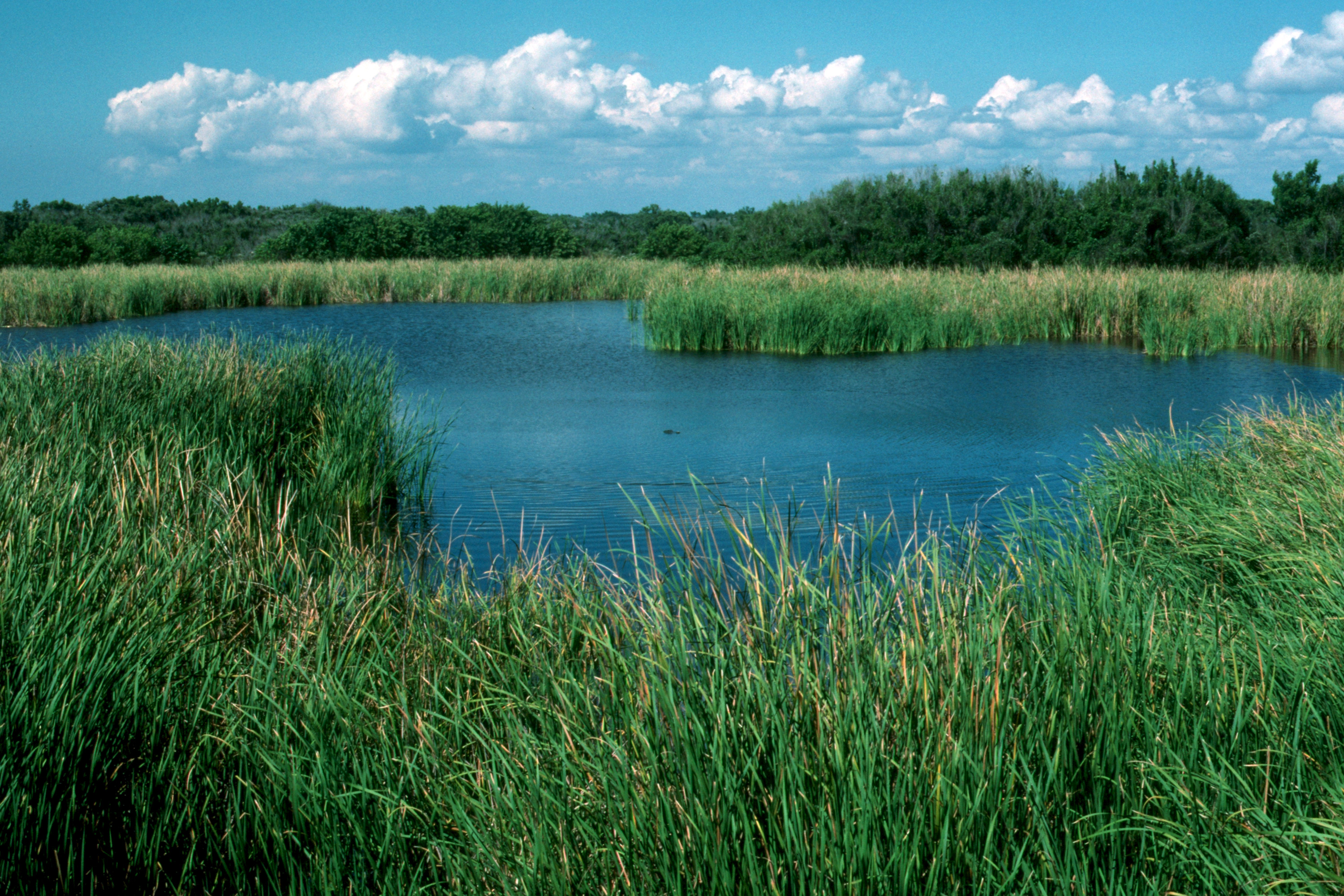 Everglades 1990 B11 Eco Pond