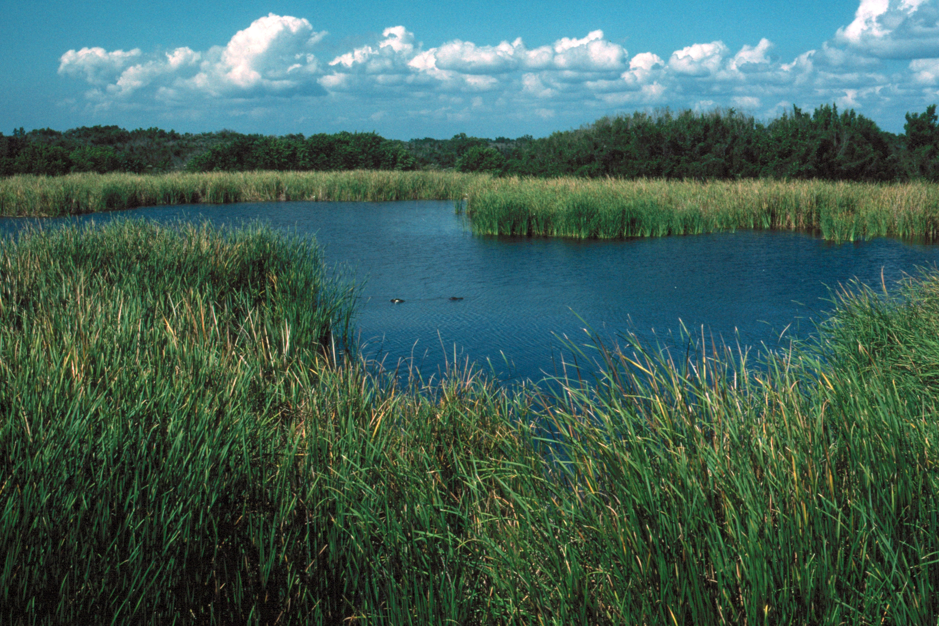 Everglades 1990 B14 Eco Pond