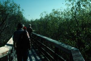 Everglades 1990 A10 Anhinga Trail