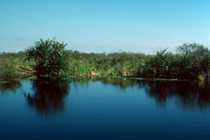 Everglades 1990 A14 Anhinga Trail