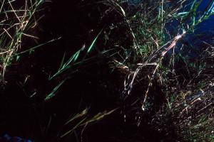 Everglades 1990 A19 Anhinga Trail