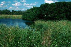 Everglades 1990 B10 Eco Pond