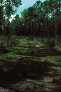 Everglades 1990 B15 Long Pine Key