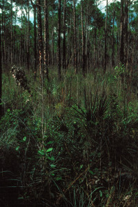 Everglades 1990 B22 Long Pine Key