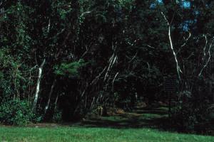 Everglades 1990 B26 Long Pine Key