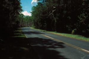Everglades 1990 B29 Long Pine Key