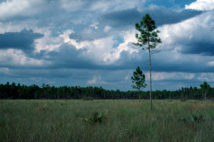 Everglades 1990 B34 Long Pine Key