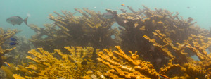 Looe Key Reef (Mooring 11, 18 Aug. 2014) 0035