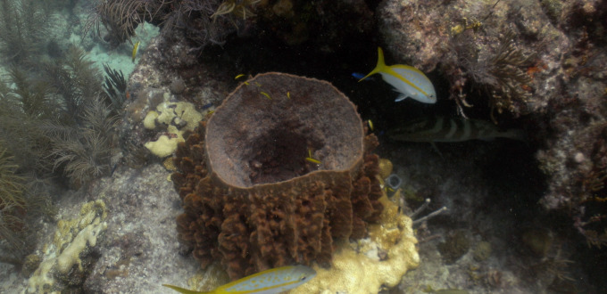 Looe Key Reef (Mooring 11, 16 Aug 2014) 0182